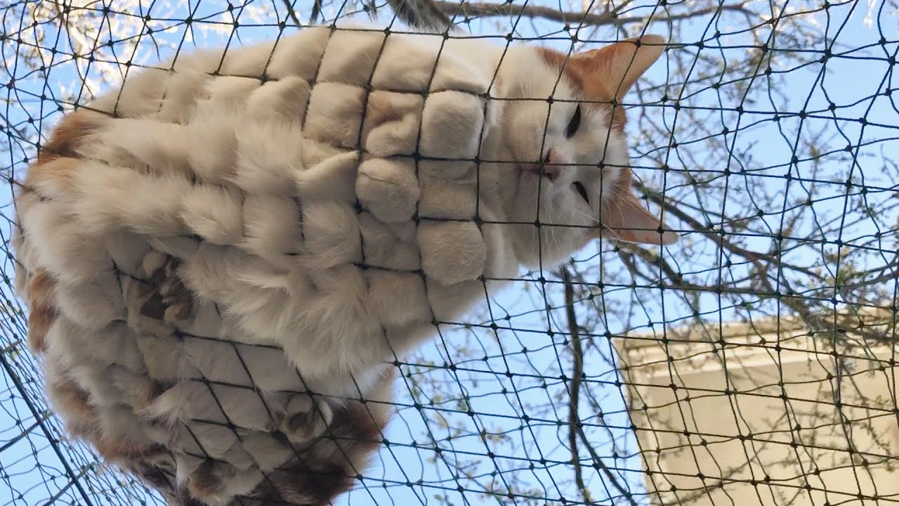 Funny and Weird Sleeping Positions of Our Outdoor Cats