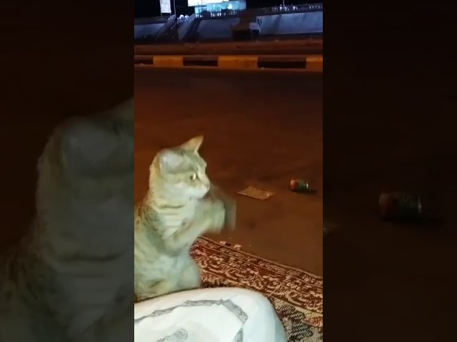 Cat tries to blend in with people to avoid getting caught by dog