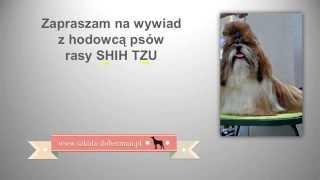 shih tzu - pielęgnacja, wychowanie, szkolenie, tresura shih-tzu - wywiad z hodowcą shihtzu