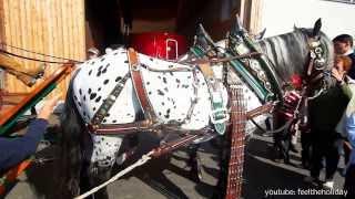 Part 2 Dalmatian Horses Dalmatiner Pferde
