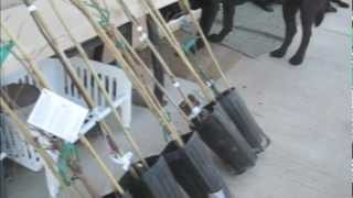Mail Order Fruit Trees - New Tool for the Job