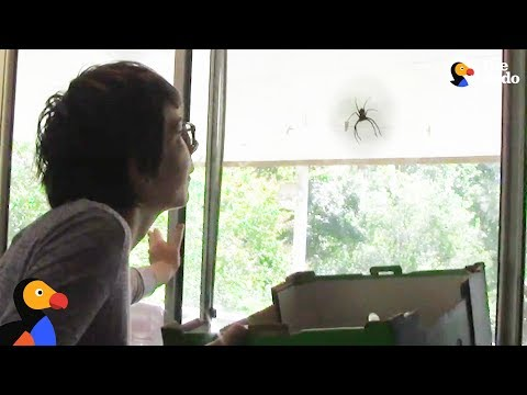 Giant Spider Doesn't Want To Leave Woman's House   The Dodo