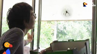 Giant Spider Doesn't Want To Leave Woman's House | The Dodo