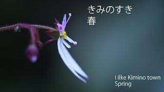 紀美野町 きみのすき 春 I like Kimino Town Wakayama Japan