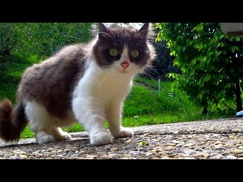 Shy & Scared stray kitten visits us in the mountains every day (UPDATE VIDEO)