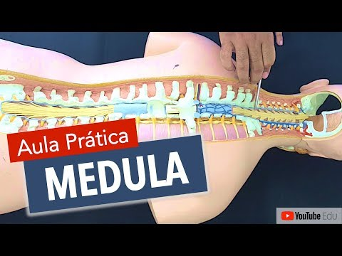 Anatomia da Medula Espinhal | Anatomia etc