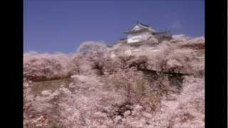 桜を待ちきれず、「山ざくら」を詠いました。桜を詠んだ和歌は多くあり...