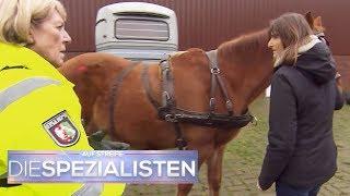 Unfall mit Pferd und Kutsche! Hat jemand das Pferd angeschossen? | Die Spezialisten | SAT.1
