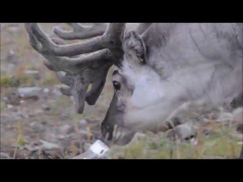 Arctic biology ++ Svalbard 2015