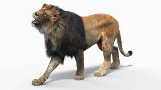 Lion 3d Model Animated