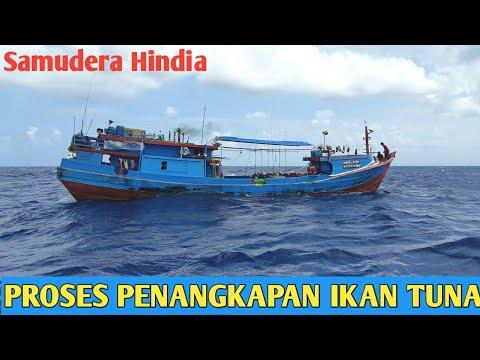 Proses Penangkapan Longline Tuna Di Samudera Hindia