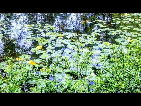 Download Top water Lilly pad fishing