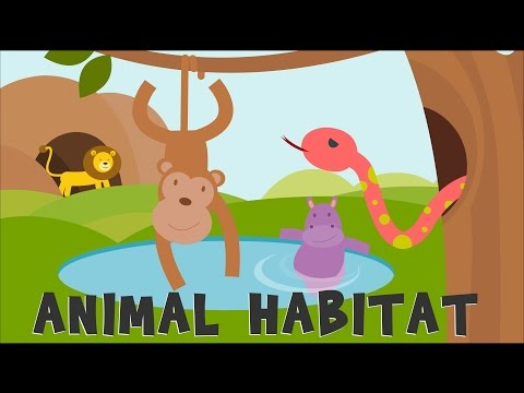 Animal Habitats | Animal Homes | Animals video for kids |