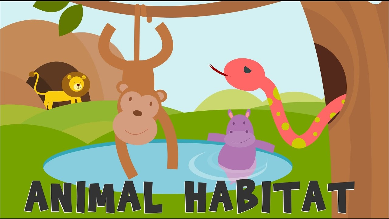 animal habitats animal homes animals video for kids youtube. Black Bedroom Furniture Sets. Home Design Ideas