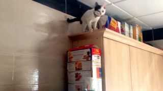 Miracle Cat Uses Cereal To Boost Her Intelligence. Then Get