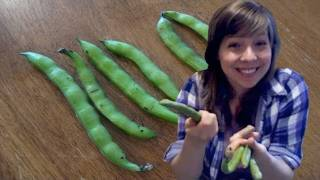 Fava Beans (for Your Vegucation) : Cooking Tips : Funny Side Up