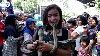Goyang Heboh (Atraksi Ular) Burok Mjs Live Perumahan Astapada Bestari Cirebon [30-06-2019]
