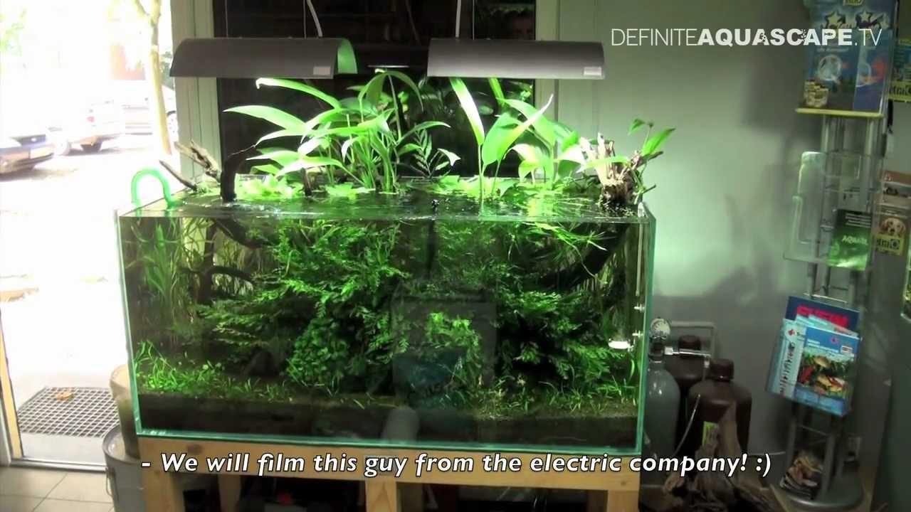 Nature Aquarium Academy Part 4 Youtube