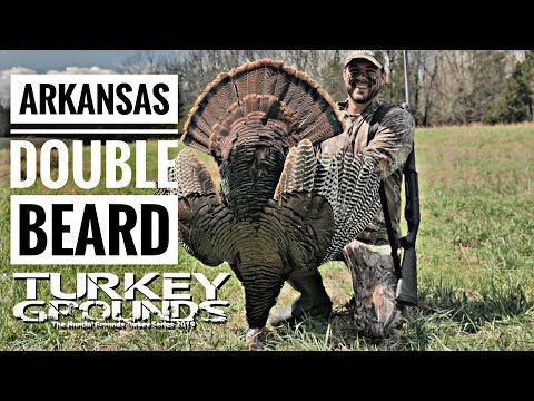 Spring Turkey Hunting - ARKANSAS DOUBLE BEARD - Turkey Grounds S9 #9