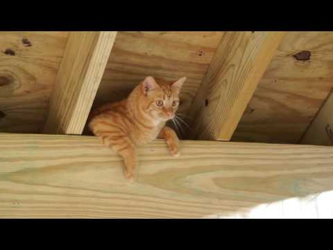 Loganberry Investigates Rafters