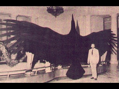 Monster and Mysteries: Thunderbirds - Documentary