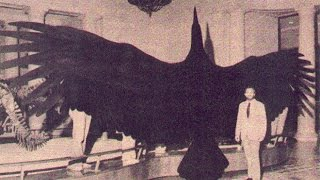 History Of The Early Giant Birds - Documentary