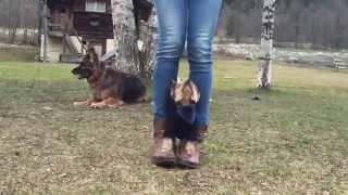 Yorkshire Terrier - Dancing Dog - Dog Tricks