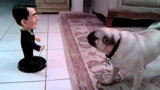 Pug Barking At Dean M.