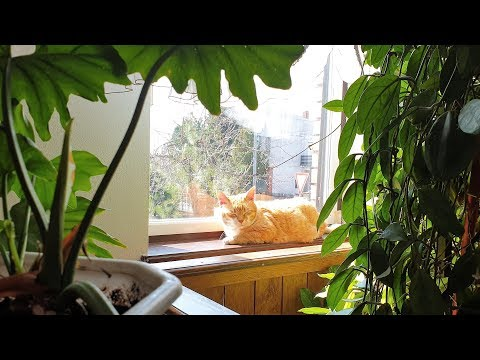 Relaxing Cat Video 39