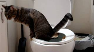 Toilet Training Zoe - Day 30 (HD)
