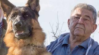 Γερμανικός Ποιμενικός  German Shepherd από τον Εκτροφέα Αρτίν Ανδρέα Κασαπιάν