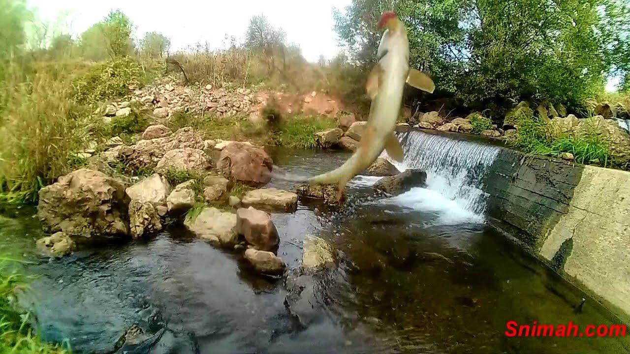 Риболов на мряна на река Матица (Елешница) - YouTube
