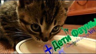 Можно ли кошкам молоко? Советы ветеринара