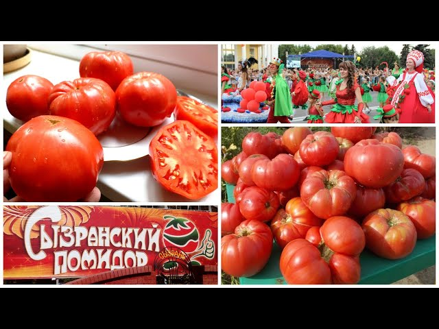 Новые поступления Сызранских томатов