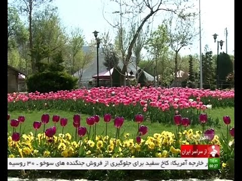 Iran Alborz province, Tulip festival in Chamran park جشنواره گل لاله بوستان چمران استان البرز ايران