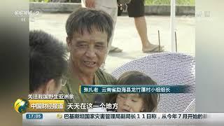 [中国财经报道]关注我国野生亚洲象 云南:野象群频繁靠近村庄| CCTV财经