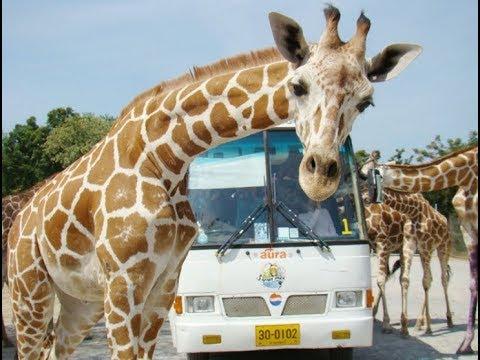 Uboun Rachani Zoo in Thailand -สวนสัตว์อุบลราชธานี
