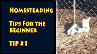 Homesteading Tips  For the Beginner Homesteader Tip #1