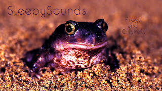 Frogs and Crickets – 9 Hour Soundscape of peaceful, relaxing, nature sounds – Fall Asleep Easy