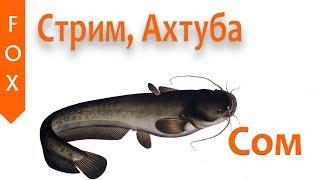 Русская Рыбалка 4 Половим сома на Ахтубе
