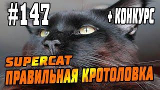 #147 Кротоловка SuperCat Vole Trap, Кот Фёдор - реальный отзыв, инструкции, советы! + КОНКУРС!!!