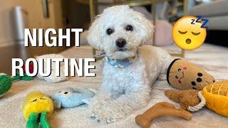 My dog's night routine // dinner, zoomies, playtime, yoga, walkies | vlog