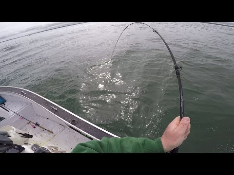 Slow Pitch Striped Bass Fishing Attempt