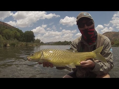 Catching BIG Smallmouth Yellowfish On FLY - Vaal River Fly Fishing