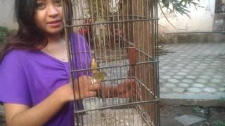 Video Burung Pleci Jinak Lucu download MP3, 3GP, MP4, WEBM, AVI, FLV September 2018