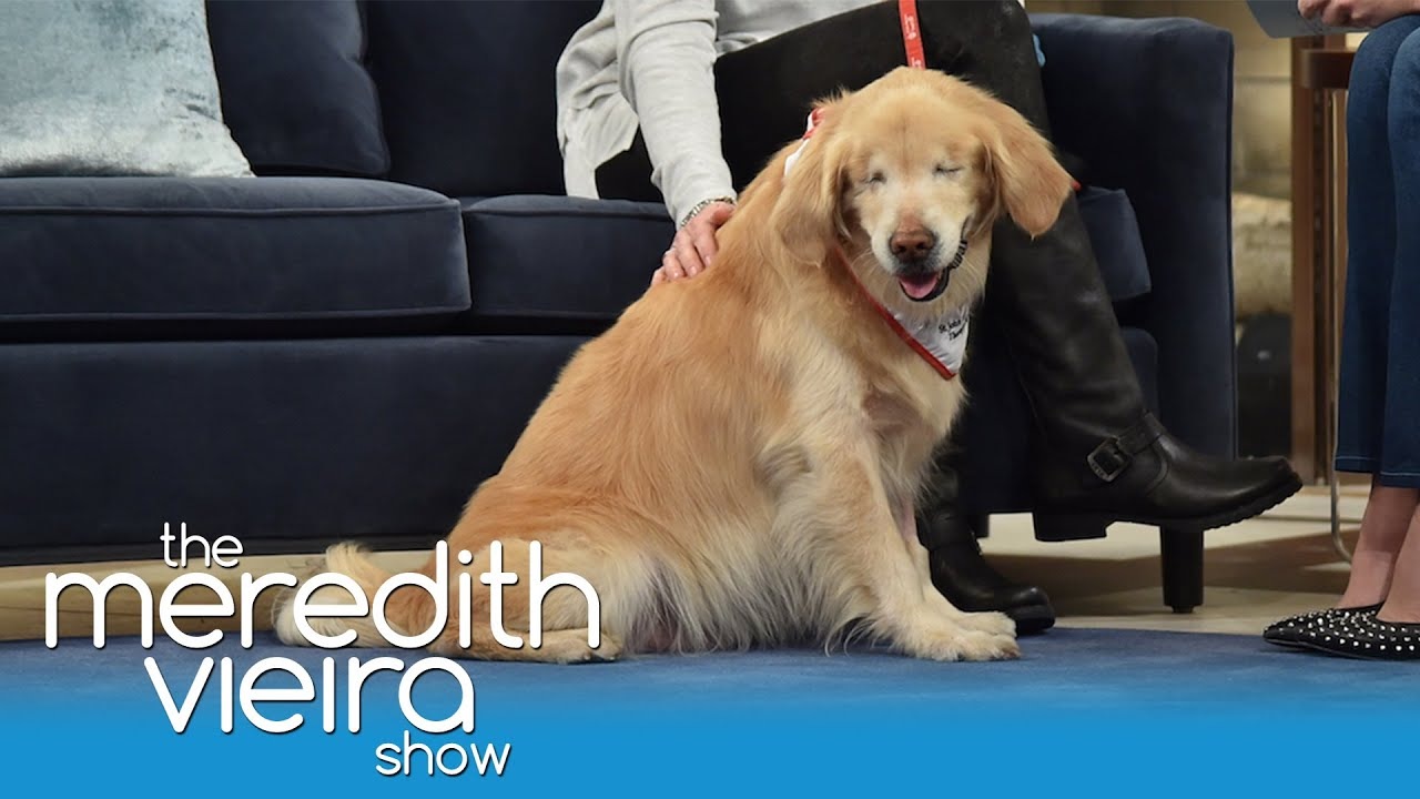 Smiley The Blind Dog The Meredith Vieira Show YouTube - Born blind smiley the golden retriever becomes a loving therapy dog
