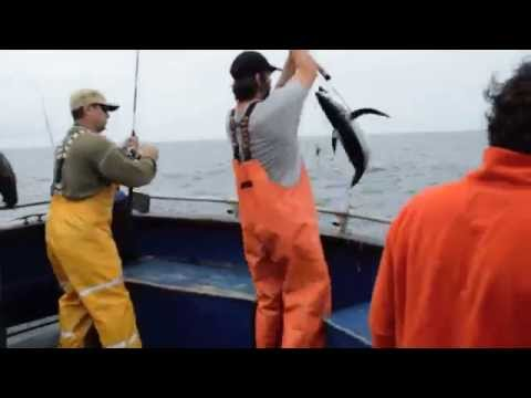 Albacore Tuna Fishing In Newport Oregon With Shawn Woods For Wild Food Diet.