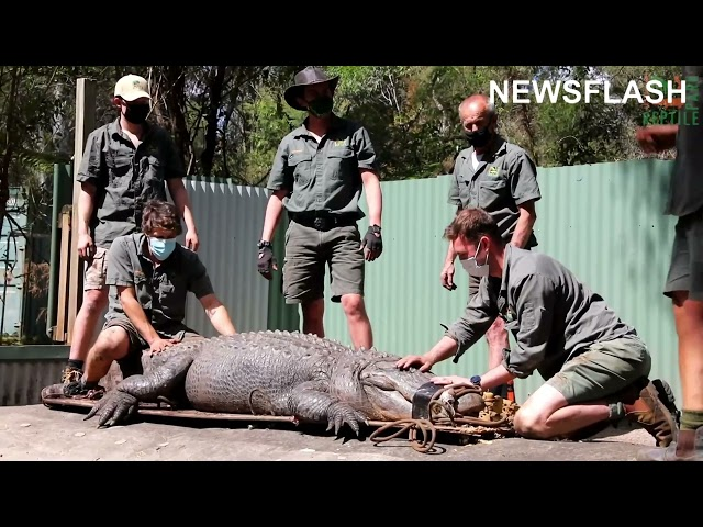 Aussie Zoo Puts Aggressive Alligator Kanye In The Naughty Corner For A Month