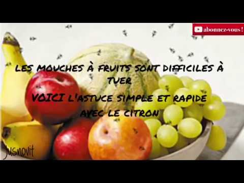 r mede sant comment tuer les mouches fruits facilement avec le citron youtube. Black Bedroom Furniture Sets. Home Design Ideas