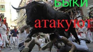 Быки атакуют людей @ bulls attacking people(Этот ролик обработан в Видеоредакторе YouTube (https://www.youtube.com/editor), 2016-02-21T07:55:48.000Z)